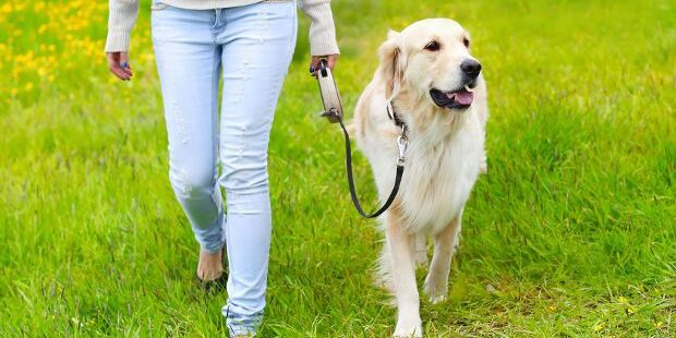 Train-Your-Dog-to-Walk-on-a-Loose-Leash